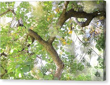 Magic Bush Canvas Print by Bruno Santoro