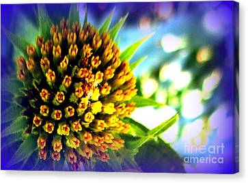 Magic Flower Canvas Print by Maria Scarfone