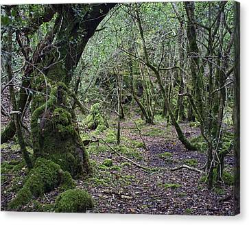 Canvas Print featuring the photograph Magical Forest by Hugh Smith