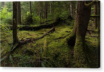 Magical Forest Canvas Print by Mike Reid