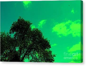Magical Sky Canvas Print by Michael Grubb