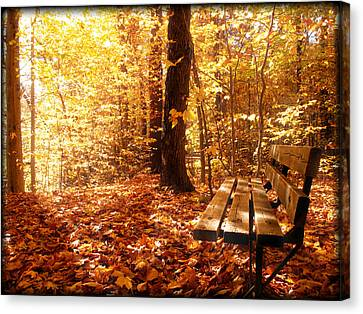Magical Sunbeams On The Best Seat In The Forest Canvas Print by Chantal PhotoPix
