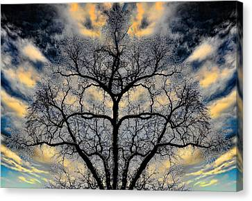 Magical Tree Canvas Print by Hakon Soreide