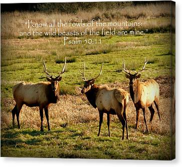 Magnificent Bull Elk Psalm 50 Canvas Print by Cindy Wright