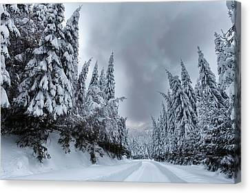Magnificent Forest Canvas Print by Evgeni Dinev