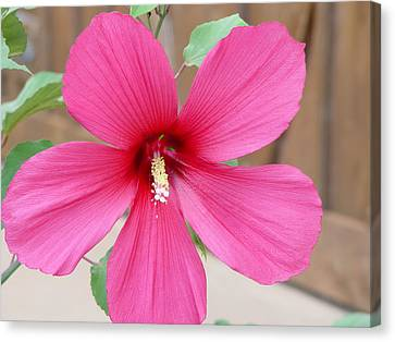 Canvas Print featuring the photograph Magnificent Hibiscus by Elizabeth  Sullivan