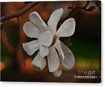 Canvas Print featuring the photograph Magnolia Bloom by Barbara McMahon