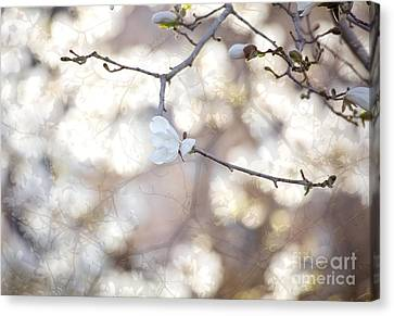 Canvas Print featuring the photograph Magnolia Dream by Susan Cole Kelly