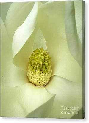 Canvas Print featuring the photograph Magnolia Grandiflora by Deborah Smith