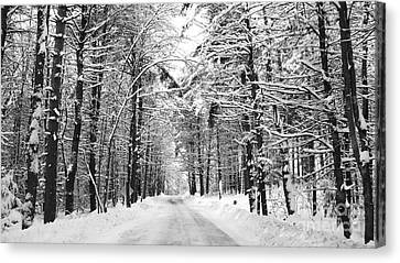 Maine Deep Woods Canvas Print by Christy Bruna