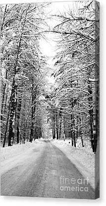 Maine Deep Woods Tall Trees Canvas Print by Christy Bruna