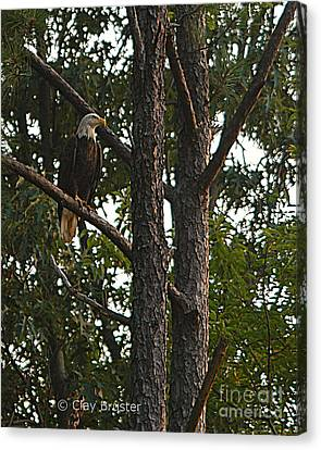 Canvas Print featuring the photograph Majestic Bald Eagle by Clayton Bruster
