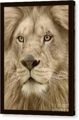 Majestic Lion Canvas Print by Megan Wilson