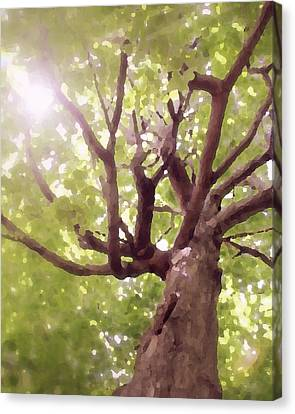 Canvas Print featuring the photograph Majestic Maple by Brooke T Ryan