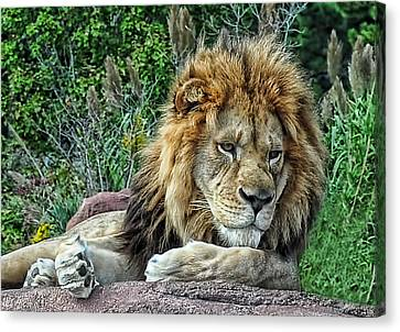 Majestic Canvas Print by Tazz Anderson