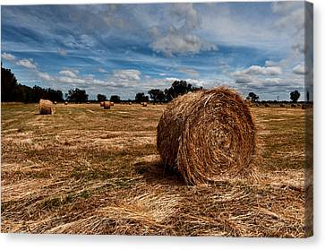 Making Hay Canvas Print by Heather Thorning
