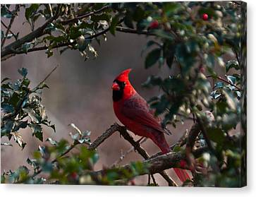 Male Cardinal Canvas Print by Ron Smith