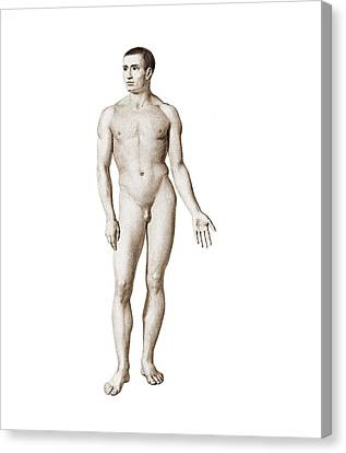 Male Nude, Artwork Canvas Print