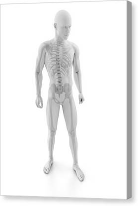 Male Skeleton, Artwork Canvas Print by Sciepro