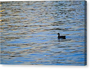 Canvas Print featuring the photograph Mallard Duck And Blue Water by Marianne Campolongo