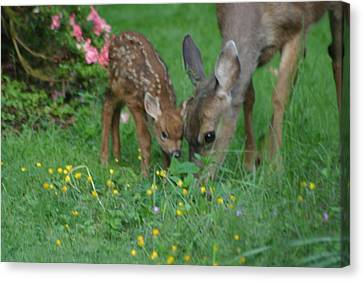 Canvas Print featuring the photograph Mama And Spotted Baby Fawn by Kym Backland