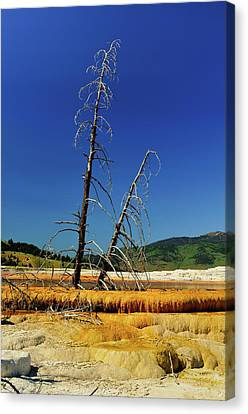 Mammoth Hot Springs Canvas Print by Greg Norrell