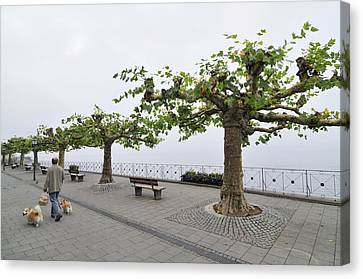 Man With Dog Walking On Empty Promenade With Trees Canvas Print
