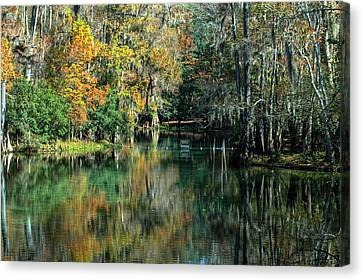 Manatee Spring Florida Canvas Print by Ronald T Williams