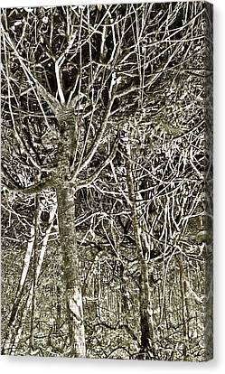 Mangrove Abstract Canvas Print by John Colley