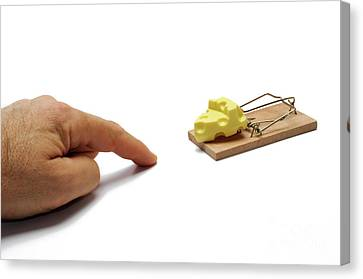 Man's Hand About To Catch Cheese On Mousetrap Canvas Print by Sami Sarkis