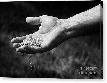 Mans Hand Scattering Grass Seeds In A Garden Over A Lawn Canvas Print by Joe Fox