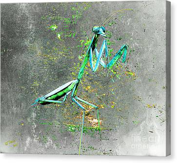 Pittsburgh Zoo Canvas Print - Mantis 1 by Arne Hansen