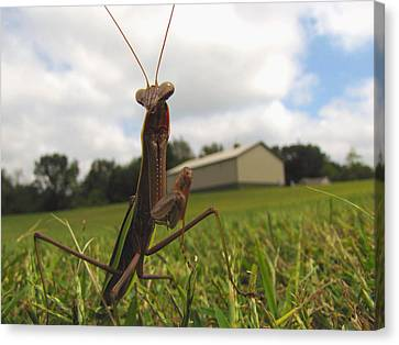 Canvas Print featuring the photograph Mantis by John Crothers