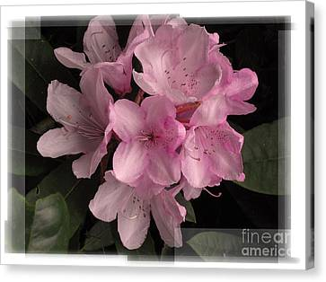 Many Splendored Blooms Canvas Print by Judee Stalmack