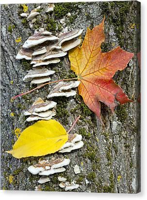 Maple Autumn Leaf On A Tree Trunk Canvas Print
