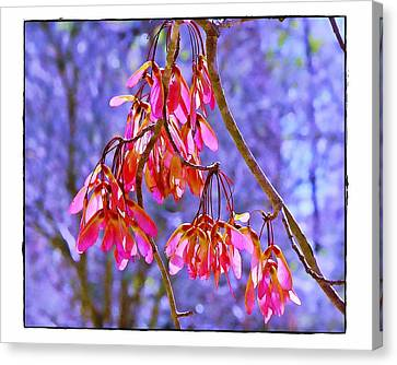 Maple Keys Canvas Print by Judi Bagwell