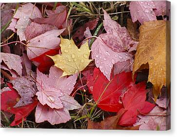 Maple Leaf Canvas Print by Long Nguyen