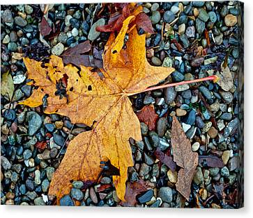 Canvas Print featuring the photograph Maple Leaf On The Rocks by Tikvah's Hope