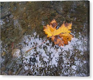 Maple Leaf Reflection 3 Canvas Print by Peter Mooyman