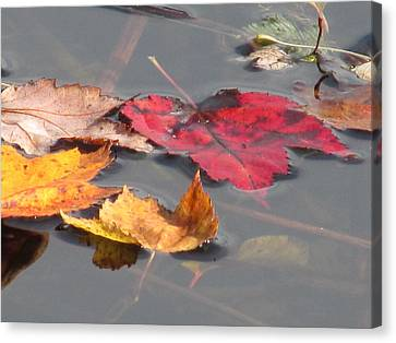 Maple Leaf Reflection Canvas Print