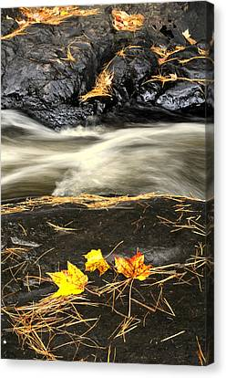 Maple Leaves And Water Canvas Print by Douglas Pike