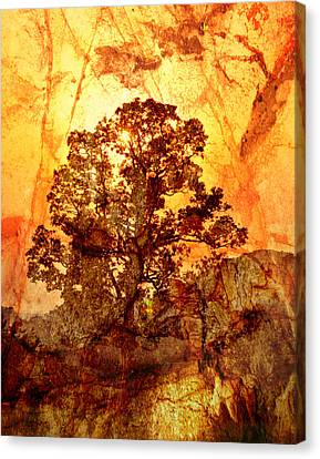 Marbled Tree Canvas Print by Marty Koch