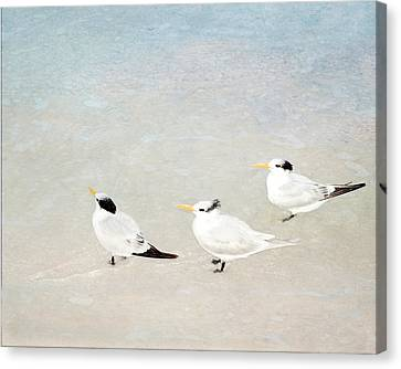 Marco Trio Canvas Print by Karen Lynch