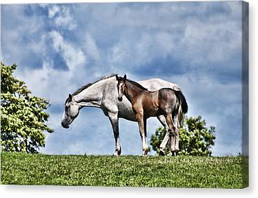 Mare And Foal Canvas Print by Steve Purnell
