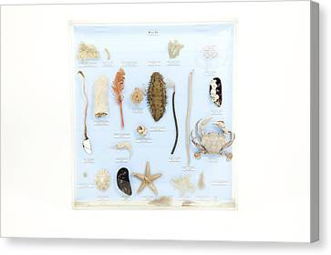 Marine Life Specimens Canvas Print by Gregory Davies, Medinet Photographics