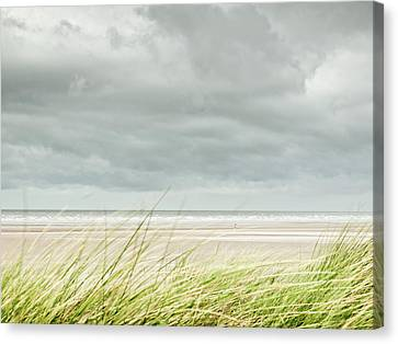 Marram Grass On Beach By Sea Canvas Print by Dune Prints by Peter Holloway