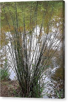 Canvas Print featuring the photograph Marsh Grass by Renee Trenholm