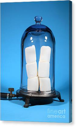 Marshmallows In A Vacuum, 4 Of 5 Canvas Print by Ted Kinsman
