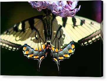 Masked Monarch Canvas Print