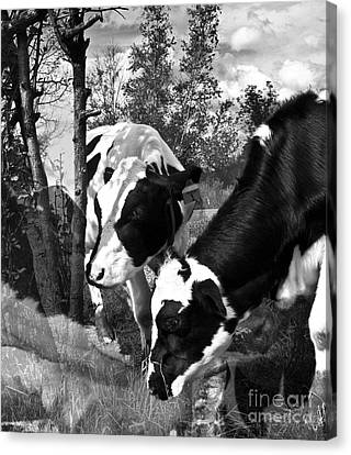 Matilda And Zoey In The Warm Afternoon Sun Canvas Print